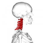 Spine or Neck Injuries First Aid & Treatment