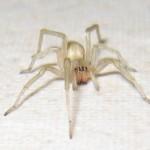 Treatment & Care for Spider Bites