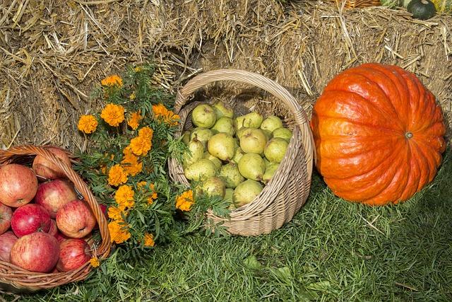 image of harvest baskets