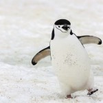 This is Cute - Prepared Penguins: Tips for a Safe and Healthy Winter
