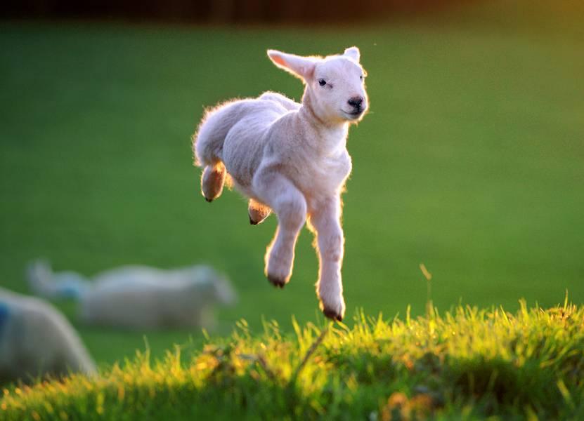 spring-leap