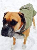 Prepare your pet for winter. Learn more at ready.gov/pets