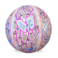 Human Anatomy Clever Catch Brand Ball