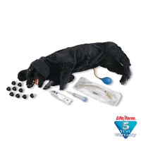 Basic Sanitary CPR Dog