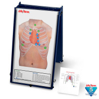 Life/form Brand Anterior Auscultation Practice Board with Case Only