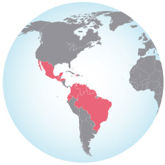 Graphic of globe as well as highlighted section of south american where Zika outbreak is occuring